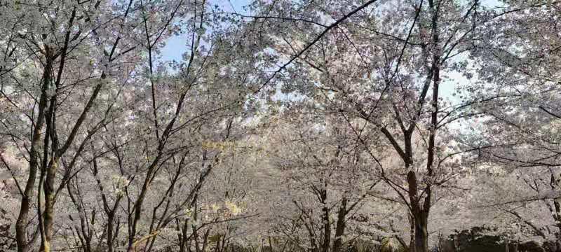 想去南京江宁去看风景(图1)